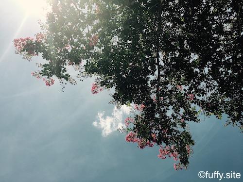 ピンクの花 木 Tree