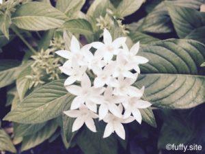 白い花 white flower