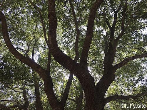 木 Tree 枝