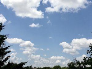 空 木 sky tree