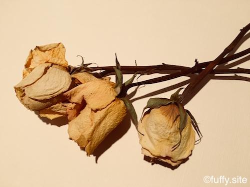 枯れたバラ Dry Rose