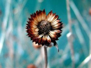 Dried Flower ドライフラワー
