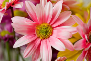 Pink Flowers Spring