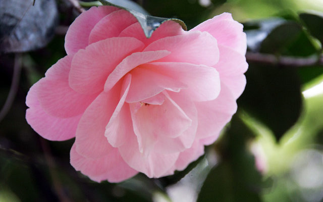 bow spring flower