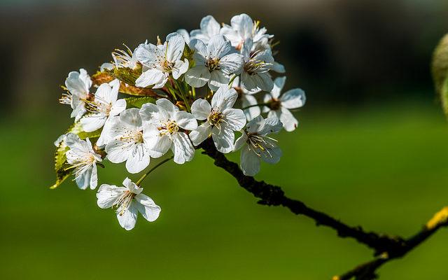 Spring Flower 春 花