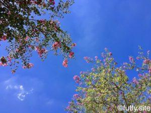 Blue Sky 空