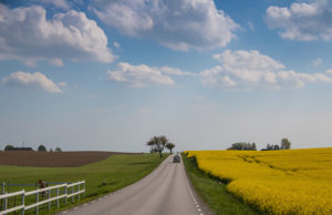 country road 春