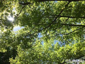 Green Tree 緑 木