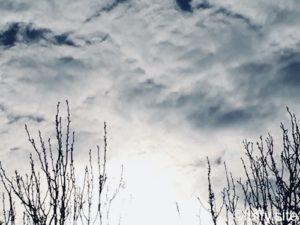 Sky Trees 空 木