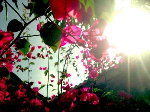 Sunshine 光