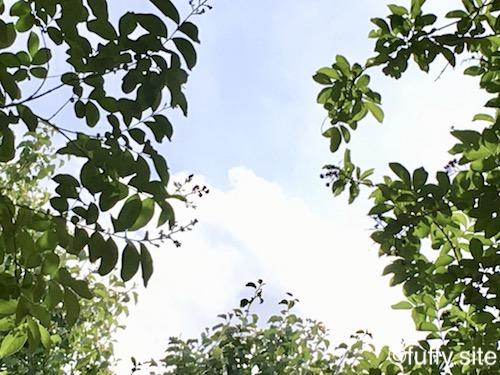 Green Leaves 緑の葉