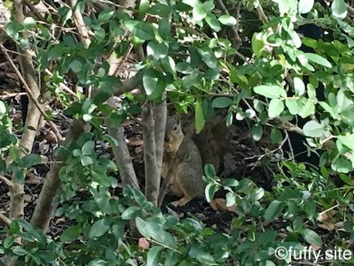 Squirrel リス 緑