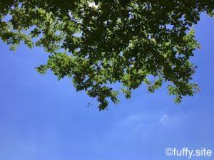 Green BlueSky 5月の空
