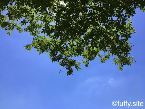 Green BlueSky 5月の空