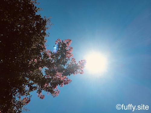 Pink flowers Tree 空