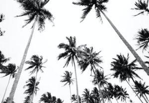 black white palm trees