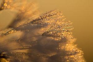 Glittering dew 露