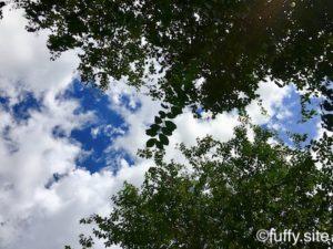 空 木 緑