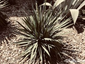 plant 植物