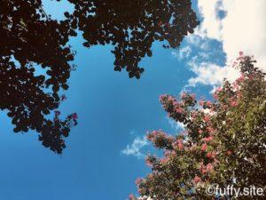 pink flowers sky 空