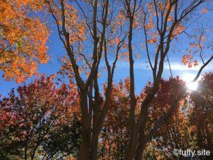 November Autumn Fall