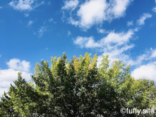 Sky Tree 空 木