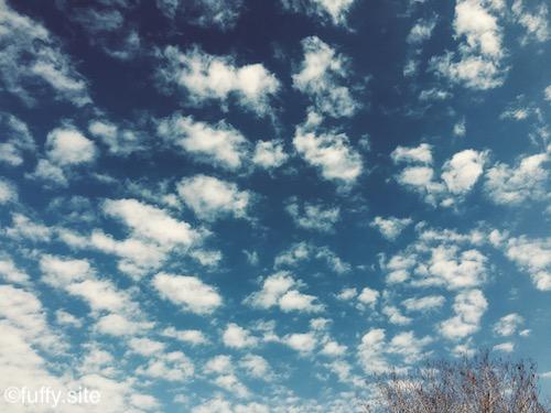cirrocumulus sky うろこ雲
