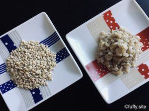 Pearl barley ハトムギ