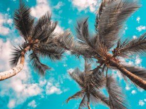 Blue sky Coconut trees