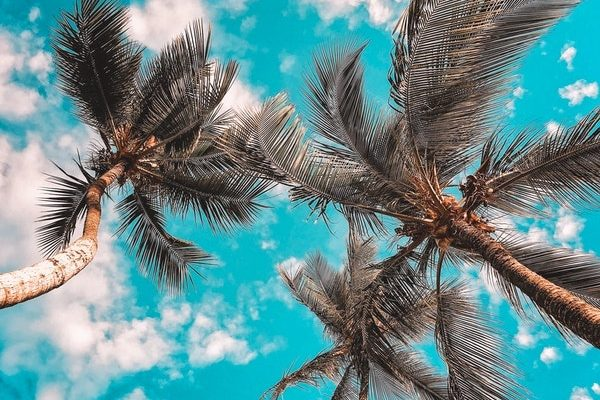 Blue sky Coconut trees