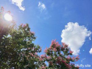 summer sky 夏空