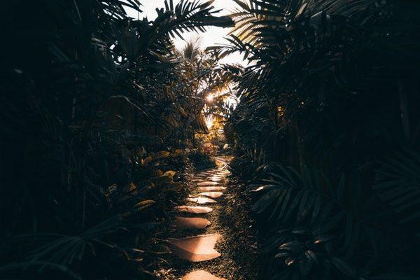 Dark Tropical