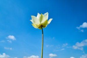blooming flower sky