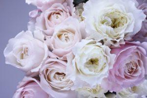 Bloom Pink Flowers