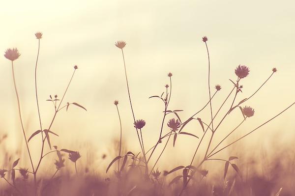 dry flowers