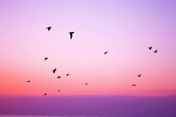 Nature Sky Birds