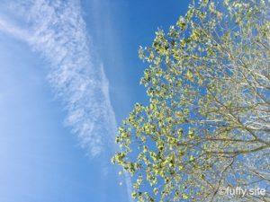 Green Tree 木 空 ブルー