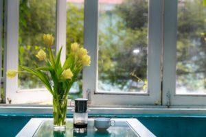 Window Tulips Yellow