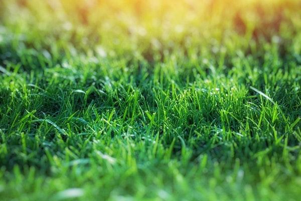 Light Green Grass