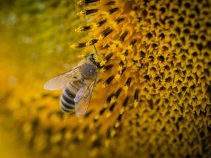 Pollen 花粉