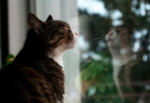 cat kitten window