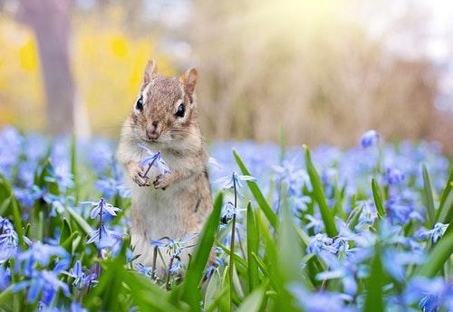Spring Squirrel