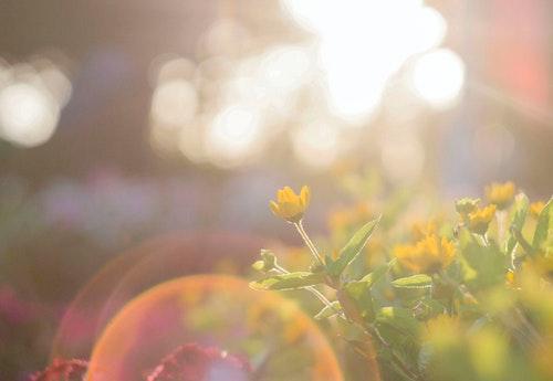 sunshine yellow flowers