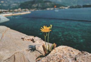 yellow flower beach