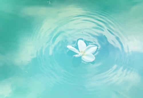 Jasmin flower clear