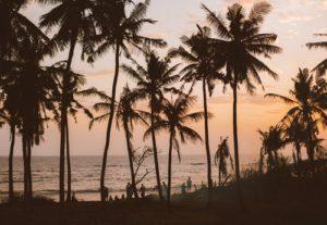 orange palm trees sunset