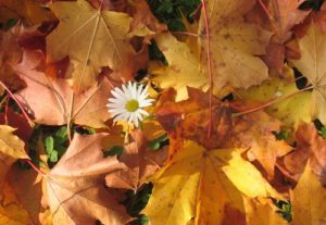 brown leafs flower