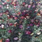 Autumn leaves me
