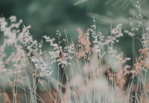 flowers grass nature