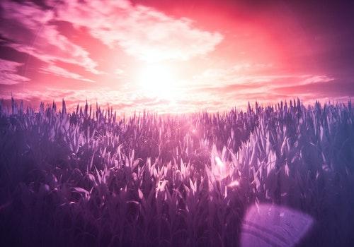 sun purple